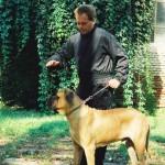 Notiuni de baza de dresaj canin: Pozitia asezat