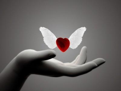 iubire-aripi